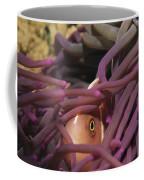 An Anemonefish Peeks Coffee Mug