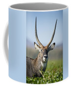 An Antelope Standing Amongst Tall Coffee Mug