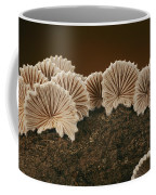 An Array Of Common Split Gill Mushrooms Coffee Mug by Darlyne A. Murawski