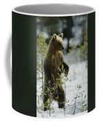 An Brown Bear Ursus Arctos Runs Coffee Mug