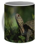 An Ornate Box Turtle Surveys Coffee Mug