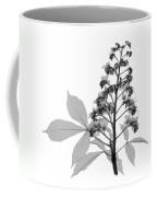 An X-ray Of A Chestnut Tree Flower Coffee Mug