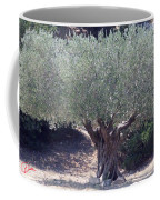 Ancient Old Olive Tree In South France Coffee Mug