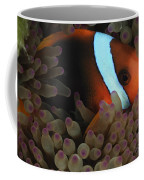 Anemonefish In Purple Tip Anemone Coffee Mug
