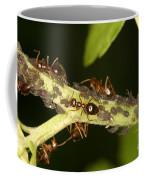 Ants Tending Aphids Coffee Mug