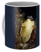 Aphelodoris Varia Sea Slug Nudibranch Coffee Mug
