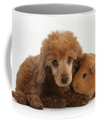 Apricot Miniature Poodle Pup With Red Coffee Mug