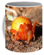 Araneus Marmoeus Coffee Mug