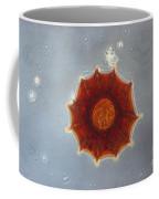 Arcella Dentata Lm Coffee Mug by Eric V. Grave