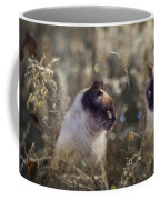 Are You Dreaming About Me - Siamese Feral Cat Coffee Mug