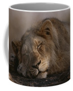 Asian Lion Panthera Leo Persica Coffee Mug