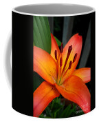 Asiatic Lily Named Gran Paradiso Coffee Mug