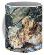 Atlantic Octopus In Shell Debris Coffee Mug