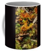Autumn Ferns On Pickle Creek At Hawn State Park Coffee Mug