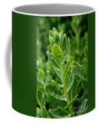 Autumn Joy Stonecrop Coffee Mug