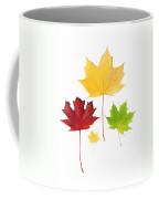 Autumn Leaves Isolated Coffee Mug