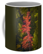 Autumn Scene Of Colorful Red Tree Along The Little Manistee River In Michigan No. 0902 Coffee Mug