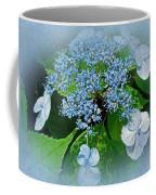 Baby Blue Lace Cap Hydrangea Coffee Mug