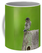Baby Bluebird On Post Coffee Mug