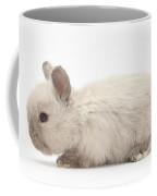 Baby Colorpoint Rabbit Coffee Mug
