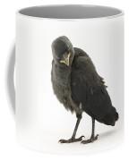 Baby Jackdaw Coffee Mug