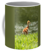 Baby Sandhill In The Sunshine Coffee Mug by Carol Groenen