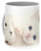 Baby White Guinea Pigs And White Maine Coffee Mug