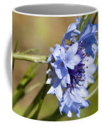 Bachelor Button Blowin In The Wind Coffee Mug
