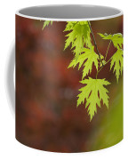 Backlit Maple Leaves On A Branch Coffee Mug by Greg Dale