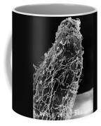 Bacteria On Sorghum Root Tip Coffee Mug