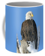 Bald Eagle Haliaeetus Leucocephalus Coffee Mug