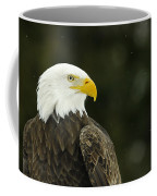 Bald Eagle In Ecomuseum Zoo Coffee Mug