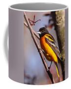 Baltimore Oriole Iv Coffee Mug