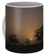 Baobab Trees Adansonia Digitata Coffee Mug