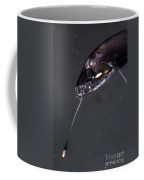 Barbeled Dragonfish Coffee Mug