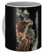 Bearded Scorpionfish, Indonesia Coffee Mug