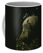 Bearded Swine Sus Barbatus Coffee Mug