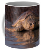 Beaufort The Turtle Coffee Mug