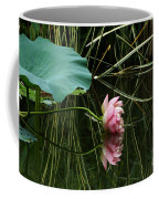 Beautiful Fallen Lotus Coffee Mug