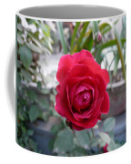 Beautiful Red Rose In A Small Garden Coffee Mug