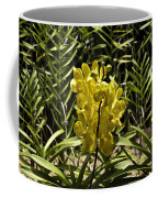 Beautiful Yellow Flowers Inside The National Orchid Garden In Singapore Coffee Mug