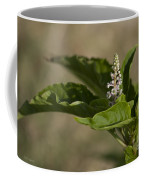 Beauty Of A Wildflower Coffee Mug by Deborah Benoit