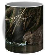 Beaver Building A Dam, Ozark Mountains Coffee Mug by Randy Olson