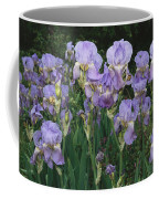 Bed Of Irises, Provence Region, France Coffee Mug