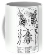 Bee Anatomy Historical Illustration Coffee Mug