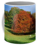 Beech Tree, Glendalough, Co Wicklow Coffee Mug