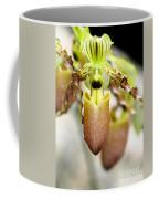 Beige Lady Slipper Orchids Coffee Mug