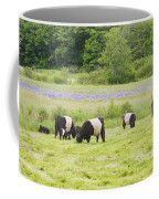 Belted Galloway Cows Pasture Rockport Maine Photograph Coffee Mug