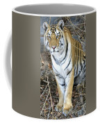 Bengal Tiger In Pench National Park Coffee Mug