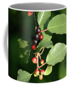 Berry Stages Coffee Mug